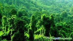 第三届中国绿色碳汇节沈阳系列活动启动