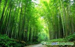 竹林经营碳汇开发CCER减排量需要有哪些什么样的条件