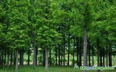 全国首笔林业碳汇质押贷款投放 开创碳汇金融先河