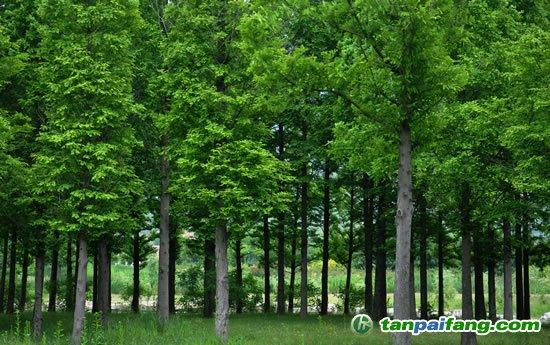 林业适应气候变化行动方案印发 部署9大重点行动