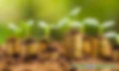 开发林业碳汇需要满足哪些条件?