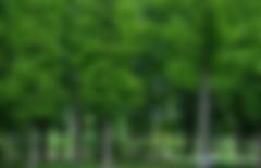 如何开发林业碳汇项目需要哪些文件资料?