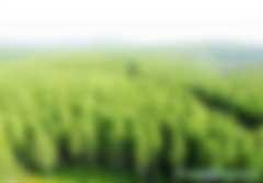"""关于举办""""林业碳汇管理""""专题课程培训的通知(招生简章)"""