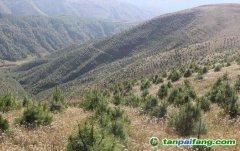 四川最大林业碳汇项目:未来30年内将吸收120万吨二氧化碳