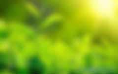 专家视角丨周诚君:构建绿色债券的可持续生态系统