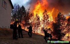 减碳要靠人类自己 树木已无法阻止气候变化