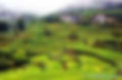 中国绿色保险发展实践与建议