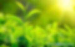 碳汇是什么意思?