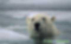人类排放二氧化碳导致全球气温变暖,专家:可能是一场骗局!