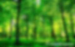 云南对单株碳汇项目提案回复【省林草局对政协云南省第十二届二次会议第0434号提案的答复(云林函〔2019〕245号)】