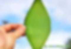 """全球变暖有救了,""""人造叶""""不仅能吸收二氧化碳,还能转化成燃料"""