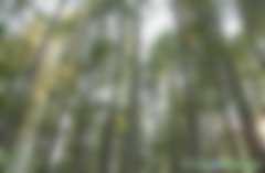 林业碳汇造林项目如何开发CCER减排量需要用到哪些文件资料的清单