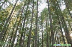 """关于举办2020年第一期""""林业碳汇管理""""专题培训的通知"""