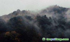 幼树或老树林对于减缓气候变化是否更重要