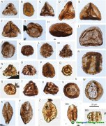 南京古生物所等揭示华南三叠纪-侏罗纪之交植被与气候变化